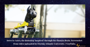 Intro to Astro, the Robodog' Inspired' by artificial intelligence through the Human Brain